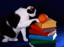 Eine Katze, die einen Stapel der bunten Bücher mit berührt Stockfotos