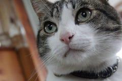 Eine Katze, die etwas schaut Stockbild