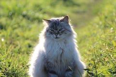 Eine Katze, die für Fotos aufwirft Stockfotos