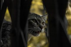 Eine Katze, die hinter dem Tor sich versteckt Stockfotos