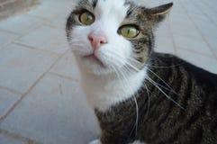 eine Katze, die ich fand, dass irgendwo er wirklich süß war und Lizenzfreie Stockbilder