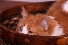 Eine Katze, die ihn versteckt, ist Gesicht Lizenzfreie Stockfotografie