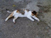 Eine Katze, die mit einer Eidechse spielt Lizenzfreies Stockfoto