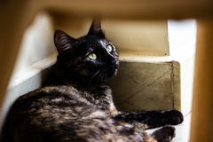 Eine Katze, die oben mit heftigen Augen schaut lizenzfreies stockbild
