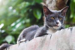Eine Katze, die sich auf der Spitzenwand hinsetzt Stockbild
