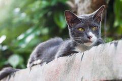 Eine Katze, die sich auf der Spitzenwand hinsetzt und nach etwas sucht Lizenzfreie Stockfotos