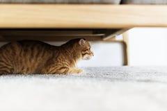 Eine Katze, die unter der Couch sich versteckt lizenzfreies stockbild