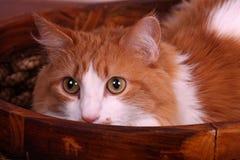 Eine Katze, die von einem Korb blickt Stockfotografie