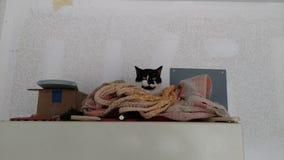 Eine Katze, eine Hängematte und ein Kühlschrank Stockbild