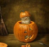 Eine Katze in einem Kürbis lizenzfreie stockfotografie