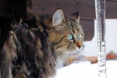 Eine Katze hinter großen Eiszapfen Lizenzfreie Stockfotografie