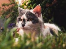 Eine Katze im Garten Lizenzfreie Stockfotos