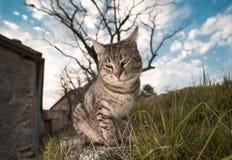 Eine Katze im Garten Lizenzfreies Stockfoto