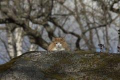 Eine Katze im wilden Stockfotografie