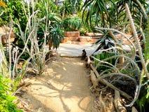 Eine Katze innerhalb des tropischen Ausstellungs-Gewächshauses Lizenzfreies Stockfoto
