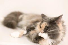 Eine Katze ist liegend säubernd und Stockfotografie