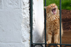 Eine Katze in Istanbul, die Türkei stockfotos