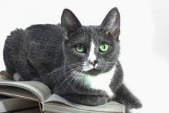 Eine Katze liegt auf dem Buch Lizenzfreie Stockfotografie