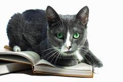 Eine Katze liegt auf dem Buch Stockfoto