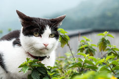 Eine Katze mit Ansicht des Berges Stockfotografie