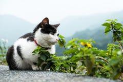 Eine Katze mit Ansicht des Berges Lizenzfreies Stockbild