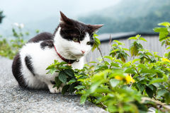 Eine Katze mit Ansicht des Berges Lizenzfreies Stockfoto