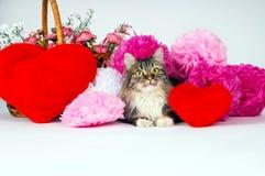 Eine Katze mit einem roten Herzen auf dem Hintergrund von hellen Papierblumen Lizenzfreies Stockfoto