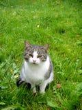 Eine Katze mit einem sehr missfallenen Gesicht Lizenzfreie Stockfotos