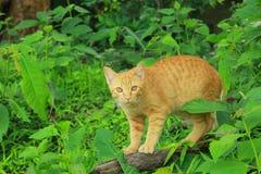 Eine Katze mit grünem Hintergrund Stockfotografie