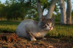 Eine Katze mit neugierigem Gesicht Stockbild