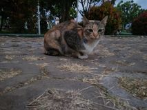 Eine Katze am Nachmittag lizenzfreies stockfoto