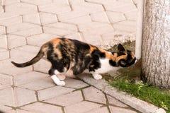 Eine Katze reich an Hilfsquellen trinkt Wasser von unterhalb des Conditioners Stockbild