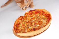 Eine Katze riecht Pizza Stockbild