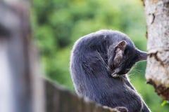 Eine Katze säubert sich Hintergrund Stockbild