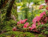 Eine Katze ` Saugenansicht des Mooses, der Blumen und der Farne Stockfotografie