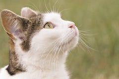 Eine Katze schaut zum Himmel Stockfoto