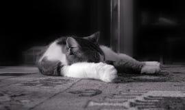 Eine Katze schläft auf dem Bodenteppich Lizenzfreie Stockbilder