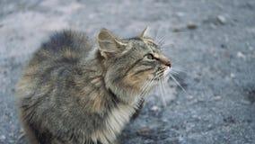 Eine Katze sitzt im Park auf dem Asphalt stock footage