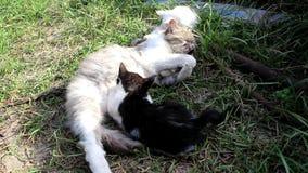 Eine Katze und drei ihrer Kätzchen stock video footage