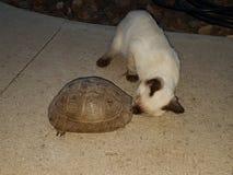 Eine Katze und eine Schildkröte trifft sich im Garten Lizenzfreies Stockfoto