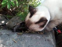 Eine Katze und eine Schildkröte trifft sich im Garten Stockfotos