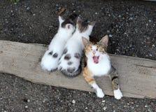 Eine Katze und zwei Kätzchen, die Rest auf einem Stück Holz haben Lizenzfreies Stockfoto