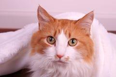 Eine Katze unter einer weißen Decke, die auf dem Fußboden sitzt Stockfotografie