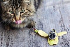 Eine Katze wünscht ihr Frühstück Lizenzfreies Stockfoto