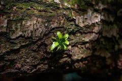 Eine Keimungs-Grünpflanze Lizenzfreies Stockfoto