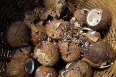 Eine keine Oberteilkokosnuß im Bambuskorb Stockfotografie