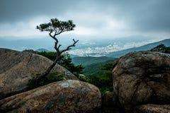 Eine Kiefer, Gumjeong-Berg, Busan, Südkorea Lizenzfreie Stockbilder