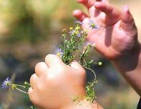 Eine Kind-` s Hand stockbild