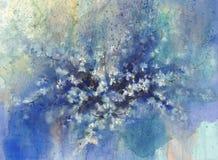 Eine Kirschblüte, die im Nachtregnerischen Aquarellhintergrund blüht Lizenzfreie Stockbilder