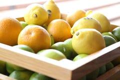 Eine Kiste frische Orangen und Zitronen Stockfoto